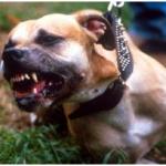raspunderea civila a proprietarilor de caini periculosi